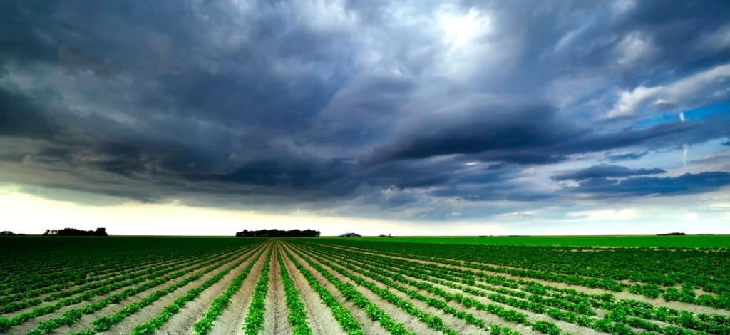 Landwirtschaft 2019