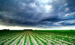 Landwirtschaft 2019 von Schäden durch Frost und Hagel bestimmt