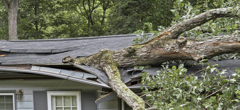 """Zweites Sturmtief in zwei Wochen – """"Friederike"""" sorgt für Schäden in Milliardenhöhe"""